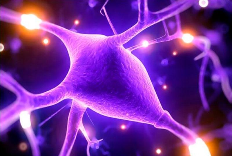 Полиамины урогенитального тракта мужчин  как фактор регуляции апоптоза сперматозоидов