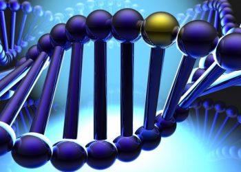 Отредактированный в России геном человека сохранен